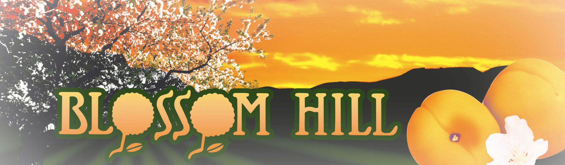 blossom-hill-apricots-label